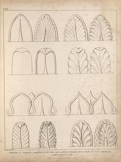 Elements of ornament, exemplified in the forms and method of drawing divers kinds of leaves, employed in that branch of art.