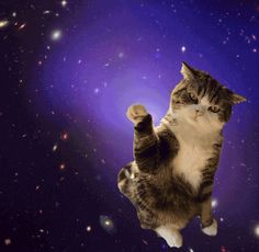 See ya on the moon, suckers! | GIFs Of Cats In Space