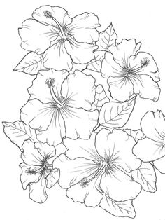 Hibiscus wallpaper for coloring in the beautiful shades that hibiscus have. Available in 'Favorite Florals'