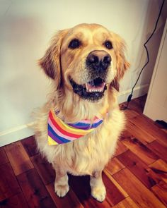 Happy Pride Day from . Finn is feeling super fly in his new bandana. Wants one in every colour immediately. Want to order a doggy bandana? Check out our website www.ie or send a message! Available in small, medium and large Rainbow Dog, Pride Day, Cockapoo, Dog Bandana, Beagle, Dogs And Puppies, Your Pet, Super Fly, Pets