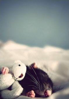 Awe, this makes me miss our pet rat Bella.