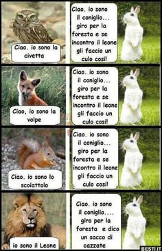 Ciao, io sono la civetta Funny Chat, Funny Jokes, Animal Memes, Funny Animals, Word Art Online, Funny Images, Funny Pictures, Hamster Care, Funny Messages