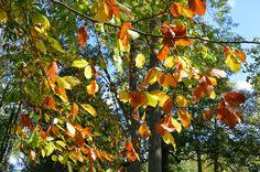 Autumn walk at Stowe