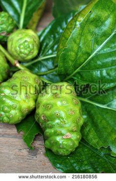 fruit-great-morinda-indian-mulberry-beach-mulberry-tahitian-noni-noni ...