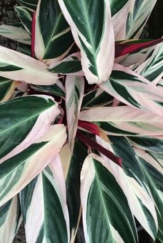 Pink and teal leaves