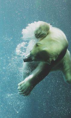 Polar bear underwater by Sjaak Verbeek Beautiful Creatures, Animals Beautiful, Cute Animals, Wild Animals, Baby Animals, Underwater Photography, Animal Photography, Amazing Photography, Love Bear