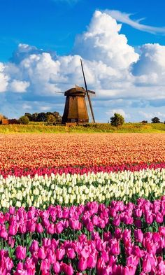 The 50 Most Beautiful Places in the World - Condé Nast Traveler Typical Holland countryside with fields of tulips and windmill Beautiful Places In The World, Places Around The World, Oh The Places You'll Go, Most Beautiful, Places To Visit, Around The Worlds, Places In Europe, Places To Travel, Delta Do Okavango