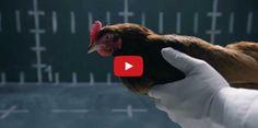 Jaguars bissige Antwort auf die Hühner-Werbung von Mercedes - Storyfilter