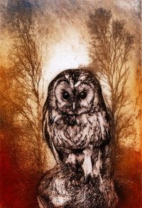 Little Owl. Etching