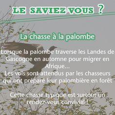 La tradition landaise : dans les Landes, chaque automne, la chasse à la palombe prend place ! #gascogne #landes #palombe