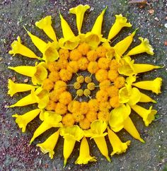Kathy Klein is a devout lover of plants, animals, people and the divine presence within all. Flower Mandalas By Kathy Klein