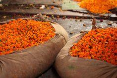 allasianflavours:Flower markets of Delhi by lavenderandlime
