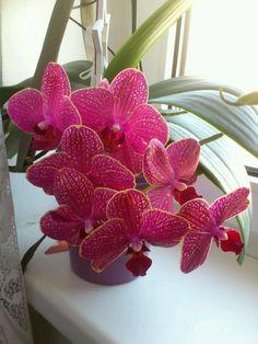 On my Windows Windows, Plants, Orchids, Window, Plant, Planting, Planets