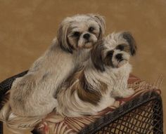 Shih Tzu Portrait in Pastel by artist Colette Theriault: