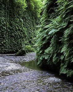 Fern Canyon in Prairie Creek Redwoods State Park, California.  They filmed a scene in one of the Jurassic Park movies here!