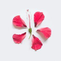 Exploded-flowers_10.jpg