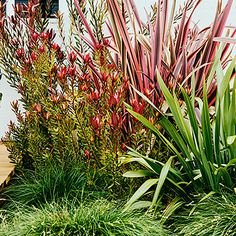 Plantings:A blooming Leucadendron 'Safari Sunset' and an upright, spiky-leafed 'Maori Queen' phormium add rosy hues above a silvery green phormium and deep green Carex tumulicola. Seaside Garden, Coastal Gardens, Beach Gardens, Outdoor Gardens, Tropical Gardens, Tropical Plants, Landscape Borders, House Landscape, Garden Landscape Design