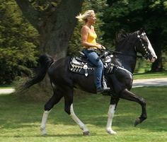 GORGEOUS TRIPLE REGISTERED BLACK & WHITE TRAIL AND SHOW HORSE