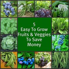 "- 5 easy-to-grow Fruits & Vegetables...More Indoor and Outdoor Food Gardening Tips on the ""Indoor/Outdoor Food Gardening"" board."