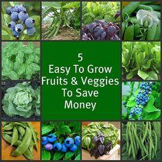 """- 5 easy-to-grow Fruits & Vegetables...More Indoor and Outdoor Food Gardening Tips on the """"Indoor/Outdoor Food Gardening"""" board."""