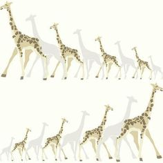 Dwell Studio Baby and Kids Giraffes Brown and Black Wallpaper - Dimensions: Inches Wide x 33 Feet Long = Approximately 56 Square Feet - Prepasted, Washable, Completely Removable York Wallcoverings - Blush Wallpaper, Stripped Wallpaper, Nursery Wallpaper, Embossed Wallpaper, Kids Wallpaper, Animal Wallpaper, Wallpaper Roll, Vogue Kids, Yellow Animals