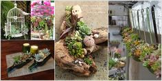 10 Cool Succulent Planter Ideas for Your Home a
