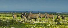 West Coast National Park Nature Reserve, Cape Town, Pet Birds, West Coast, Sliders, Conservation, South Africa, Moose Art, African