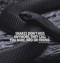Snakes dont hiss anymore..