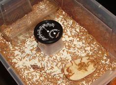 """Breeding and Raising Mealworms For Your Chickens""~Not sure I could do this, as live mealworms creep me out, lol! :O"