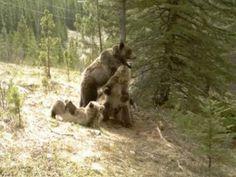 The Secret Lives of Bears