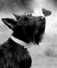 Butterfly balancing nose