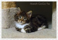 Cat Farm, Cats, Animals, Gatos, Animales, Animaux, Animal, Cat, Animais