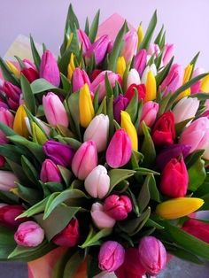 Tulips Garden, Tulips Flowers, My Flower, Pretty Flowers, Fresh Flowers, Spring Flowers, Planting Flowers, Tulip Bouquet, Floral Bouquets