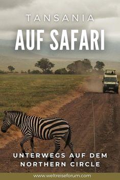 """Wenn Du nur Platz für ein einziges Reiseziel auf deiner Bucket List hast, dann sollte dort eine Safari im Norden von Tansania stehen. In der weiteren Umgebung von Arusha bilden vier Nationalparks den sogenannten """"Northern Circuit"""". Hier erzähle ich, was du wo erleben kannst."""