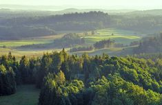 Latvia's forest landscape