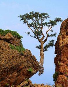 Un árbol  perfecto en un lugar no muy comun,haciendo d la imagen una foto perfecta y hermosa.