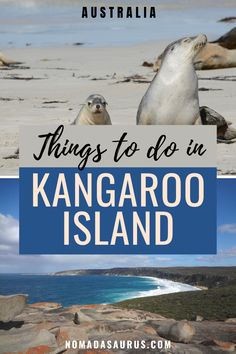 From exploring unique wildlife to this region to sailing along the breathtaking coastline, these are just some of the things to do in Kangaroo Island.  Attractions in Kangaroo Island, Kangaroo Island attractions, where to go in Kangaroo Island, what to do in Kangaroo Island, where to go in south australia, What to see in south australia, where to travel in south australia, what to see in south australia, where to go in south australia.  #SouthAustralia #KangarooIsland Australia Country, Australia Tours, South Australia, Australia Travel, Scuba Diving Australia, Yahoo Travel, Family World, Kangaroo Island, Sailing Trips
