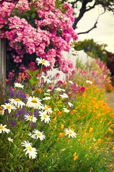 cottage flower garden along the fence