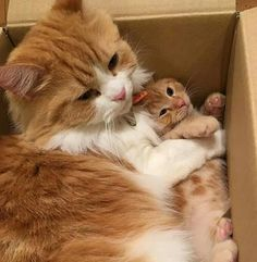 Mommy kitty with her precious baby kitten and like OMG! get some yourself some pawtastic adorable cat apparel!