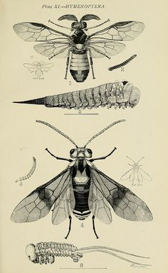 n134_w1150 by BioDivLibrary, via Flickr