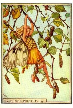 The Silver Birch Fairy by Cicely Mary Barker