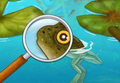 [어린이 자연관찰] 올챙이 성장과정과 개구리의 특징에 대해 알아보자(+영상) : 네이버 블로그