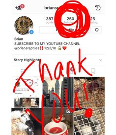 Thank you so much never thought Id make it to this number.! Lets keep it going everybody next goal is 500.! Might do a giveaway for 500 followers who knows.!  #philadelphia #philly #centercityphilly #ballpythons #ballpythonsofig #breeder #ballpython #youtube #pythonregius #followme #snakes #instagram #ratsofinstagram #snakes #snakesofinstagram #python #briansreptiles #ballpythons101 #ballpythonmorphs #herper #reptile #reptiles #python #pythonsofinstagram #animals #pets