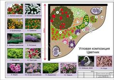 клумба непрерывного цветения из многолетников схемы: 12 тыс изображений найдено в Яндекс.Картинках