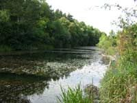 Tyne Anglers Alliance Waters - Throckley.  From thetaa.co.uk.  The Reef - JE.