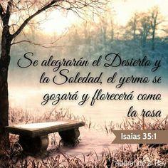 SE ALEGRARÁN EL DESIERTO Y LA SOLEDAD Y EL YERMO SE GOZARÁ Y FLORECERÁ COMO LA ROSA  ISAIAS 35:1