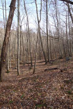 Along trail in Fliegel Farm Woods, Ashford CT