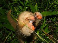 Corcovado National Park, South Puntarenas es un parque con diversos animales. Diversos ecosistemas que se pueden descubrir.