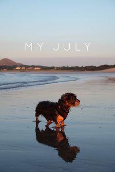 My July on @stellerstories