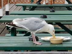 I took this at Clacton Pier, Essex...... The seagull looked like it was enjoying it's meal.....